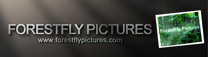 forestfly_pictures
