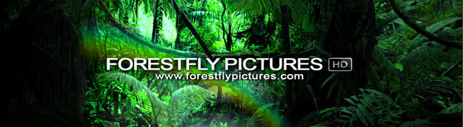 forestfly_pictures_HD